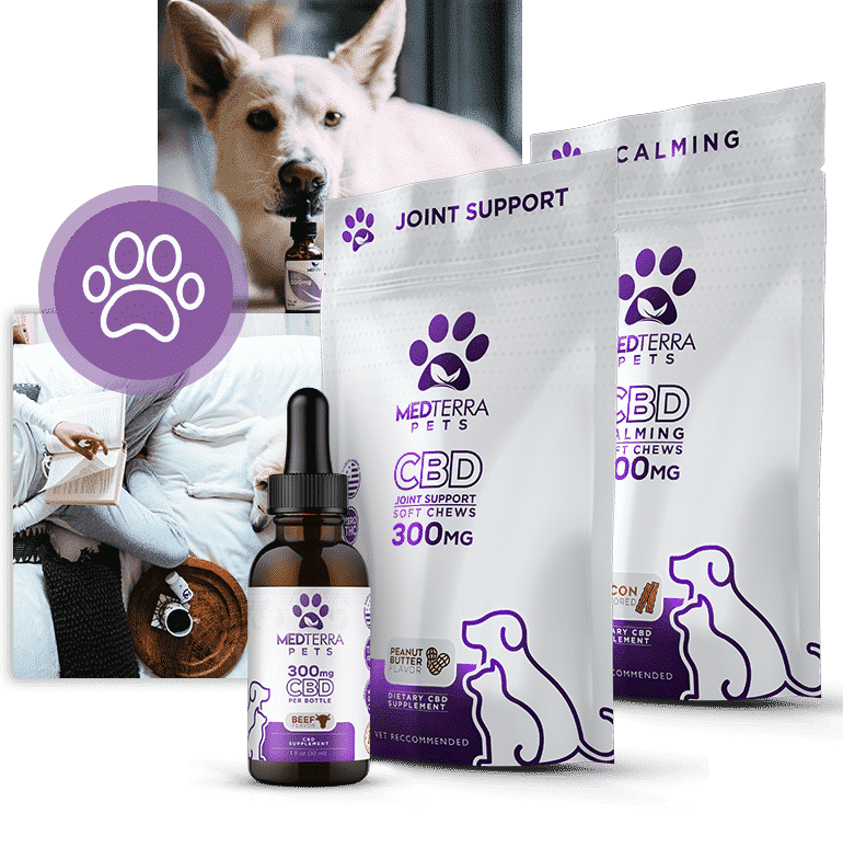 MedTerra CBD Soft Chews for Pets