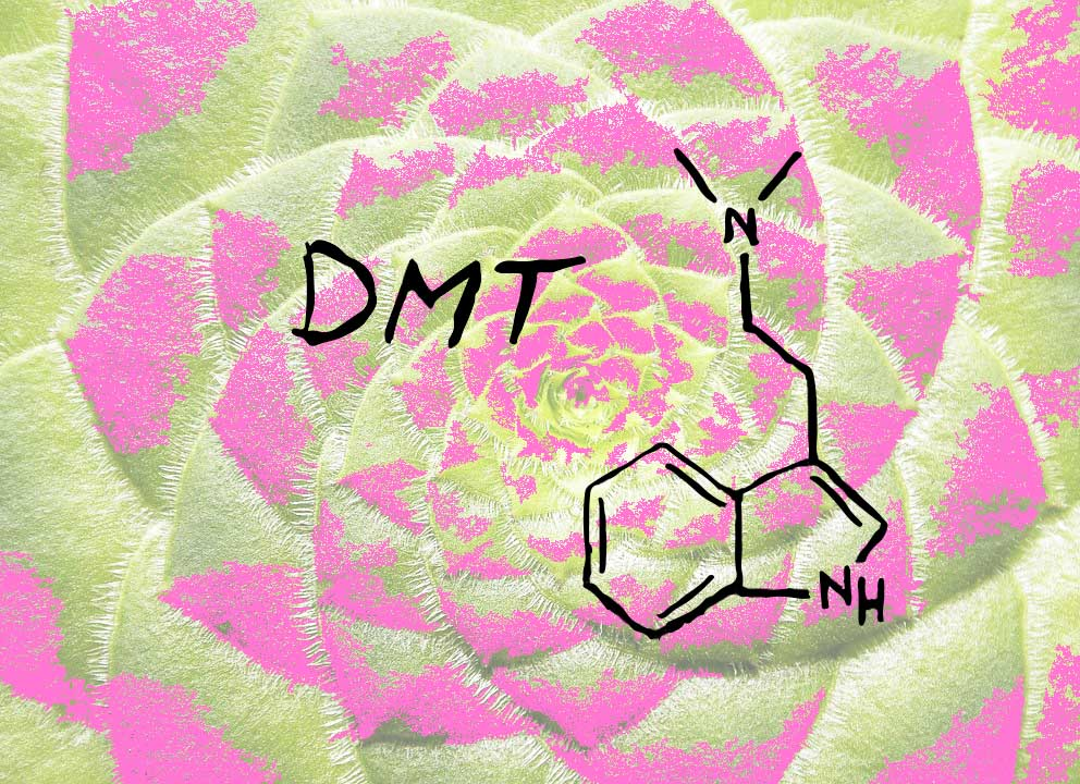 Psychedelic plant with DMT molecule, DMT containing plants.