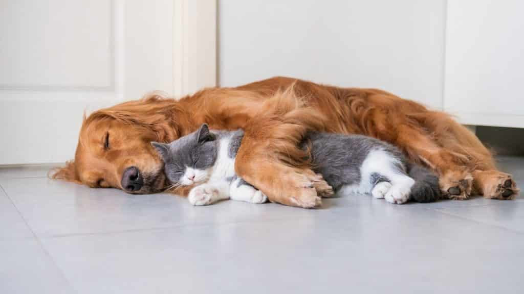 Dog and cat resting together - maybe they've been given some CBD oil?!?